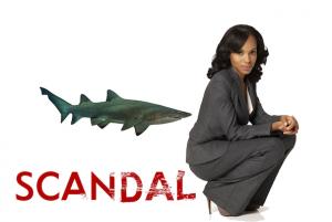 Scandal Shark